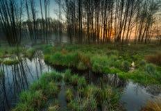 Härlig soluppgång över dimmiga våtmarker Arkivfoto