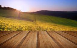 Härlig soluppgång över fält av rapsfröt i bygd i Sprin Royaltyfri Foto