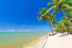 Härlig tropisk strand med kokosnötpalmträd Arkivbilder