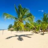 Härlig tropisk strand med kokosnötpalmträdet Arkivbilder