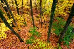 Härliga Autumn Illinois Landscape Arkivbild