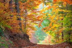 Härliga Autumn Trees i den färgrika skogen, guling, gör grön Fotografering för Bildbyråer