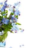 härliga blåa blommor glömmer mig nots Fotografering för Bildbyråer