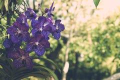 Härliga blommande orkidér i skog Arkivfoto