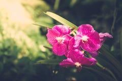 Härliga blommande orkidér i skog Royaltyfria Bilder