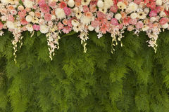 Härliga blommor med den gröna ormbunken lämnar väggbakgrund för att gifta sig Arkivbilder