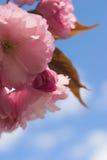 härliga blomningar Royaltyfri Fotografi