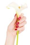 härliga fingrar spikar Royaltyfri Foto