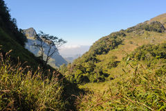 Härliga fotvandra slingor i rainforest Arkivbilder