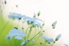 Härliga nya vita blommor, abstrakt drömlik blom- backgroun Arkivbild