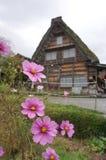 Härliga rosa färger blommar med det japanska huset för traiditionalen på Shirak Royaltyfri Foto