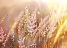 Härligt fält av högt gräs Arkivfoto