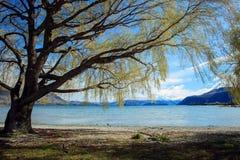 Härligt landskap av den Nya Zeeland för södra ö för sjöwananka segern Arkivbild