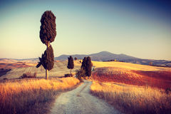 Härligt landskap i Tuscany Arkivfoto