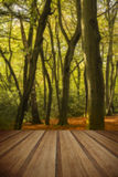 Härligt livligt guld- Autumn Fall skoglandskap med trä Royaltyfria Bilder