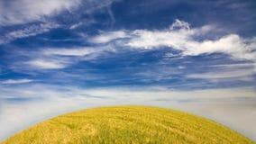 härligt soligt dagfält Arkivfoto