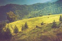 Härligt sommarberglandskap på solsken Sikten av ängen fäktade staketet och skrämmer att beta på den Royaltyfria Foton