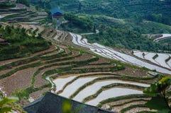 Härligt terrasserat fältlandskap i vår Arkivbild