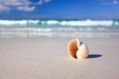 Härligt tropiskt skal på strandsemestern Arkivbilder