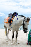 Hrose. Standing on the HUAHIN beach Thailand Stock Image