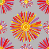 Сhrysanthemum Στοκ Φωτογραφία