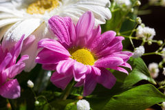 Сhrysanthemum in a bouquet Royalty Free Stock Image