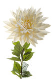 Сhrysanthemum cream artificial flower. Isolated on a white background Stock Photos