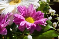 Hrysanthemum del ¡ di Ð in un mazzo Immagine Stock Libera da Diritti