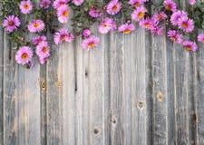 Hrysanthemum do jardim no fundo de madeira rústico Fl denominado retro Imagens de Stock Royalty Free