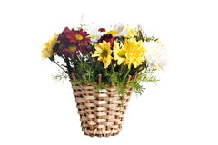 �hrysanthemums Royalty Free Stock Photo