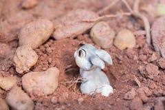 Häschen, das in einem Kaninchenbau sich versteckt Stockbild