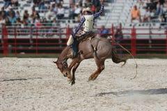 häst för 2 cowboy Royaltyfria Bilder