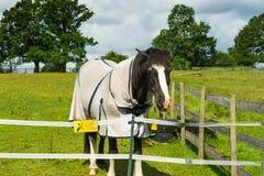 Häst i corral Royaltyfri Fotografi
