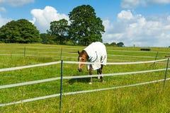 Häst i corral Arkivfoto