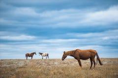 Häst i ett fält, lantgårddjur, naturserie Royaltyfri Fotografi