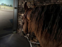 häst i stable Royaltyfri Foto