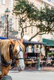 Häst i stadsmarknad Arkivfoto