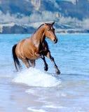 Häst i vattnet Fotografering för Bildbyråer