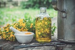 HSt Johns wort rośliny, olej lub infuzi przejrzysta butelka, moździerz na drewnianym stole outdoors zdjęcia royalty free