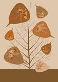 höst leaves1 Royaltyfria Bilder