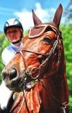 Häst med jockeyen Royaltyfria Bilder