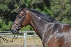 Häst - sidosikt Royaltyfri Bild
