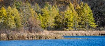 Höst sjö och trädpanorama Arkivfoto