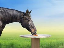 Häst som äter morötter på tabellen Royaltyfria Bilder