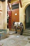 Häst utanför en shoppa i den gamla medinaen av Fez, Marocko Arkivbild