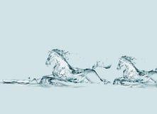 hästar som kör vatten två Arkivbilder