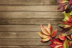 höstbakgrund Royaltyfri Fotografi