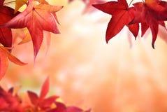Höstbokehbakgrund med röda sidor Arkivfoto