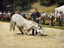 Hästdressyrshow Arkivfoto