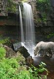 Hästdrinkar på foten av vattenfallet Arkivfoton